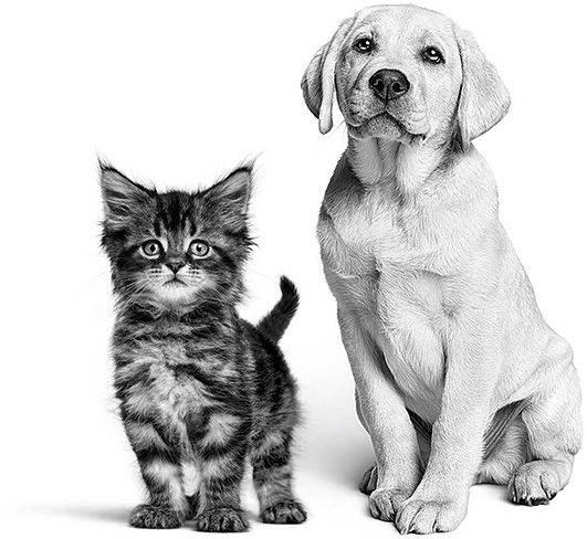 Dog and cat picture